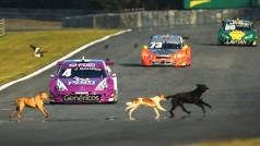 Ave e cães ouviram de perto o ronco dos Stock Cars em Curitiba (foto Luca Bassani)
