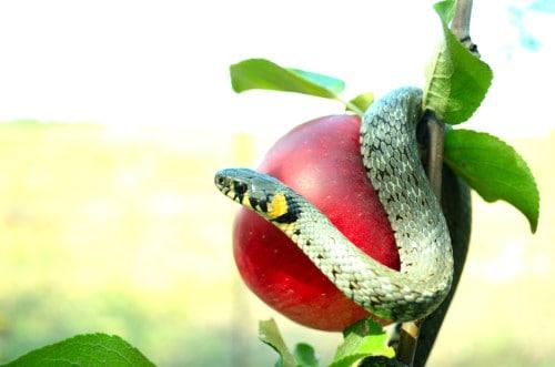 serpent tempter  DE CARROS & HACKERS A NIRVANA & INFERNO - PARTE 1 temptation