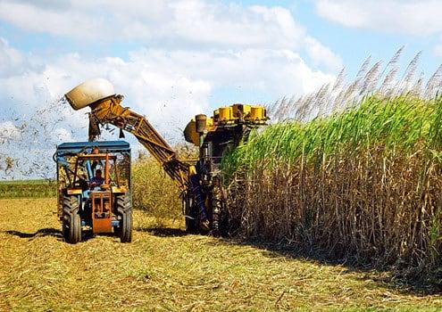 Nota-se a grande massa da palhada da cana (jobeconomia.com.br)