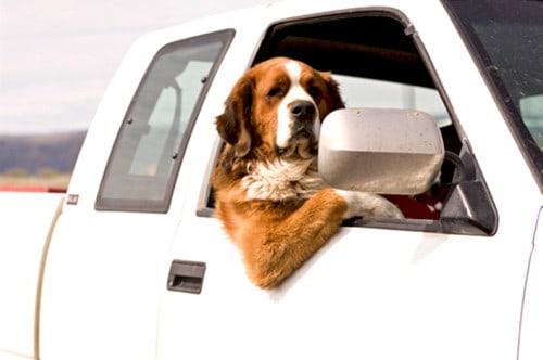 dicas-para-o-cachorro-parar-de-vomitar-no-carro