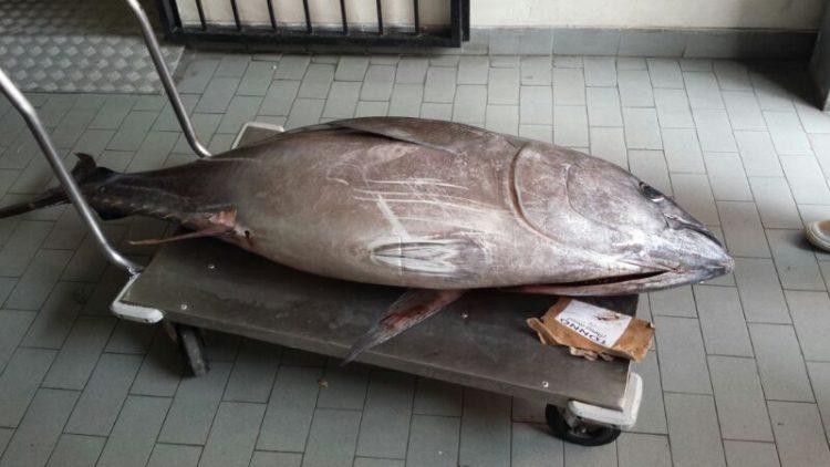 Tempos modernos, o garçom apanha seu smartphone e lhe mostra o atum que comprou de manhã