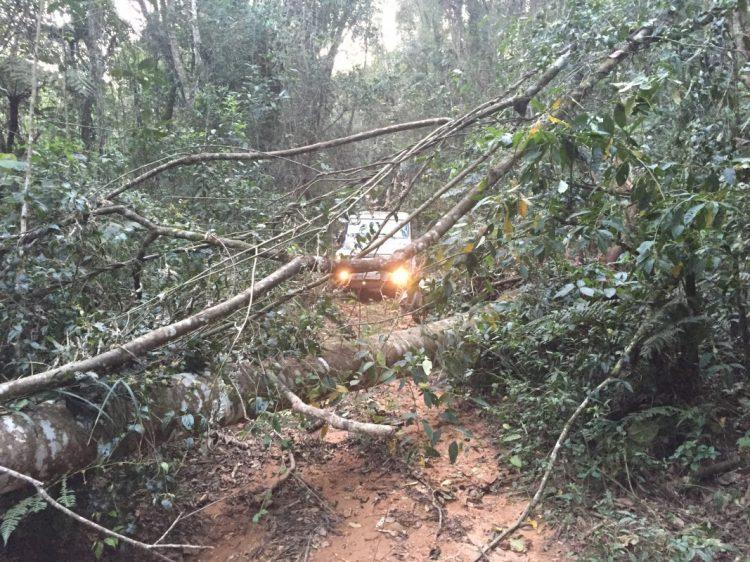 Árvores caídas na trilha são relativamente comuns - ainda mais em época de chuvas fortes. Equipamentos adequados para essas situação sempre serão úteis